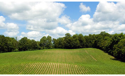 Agricultural Land Assessments